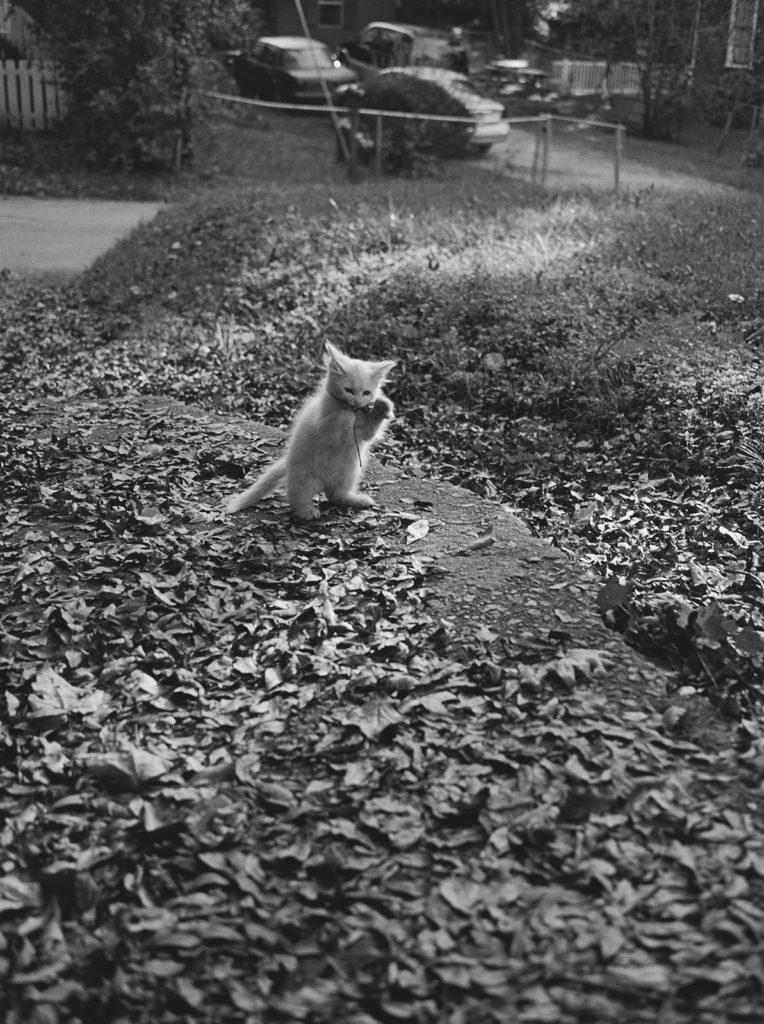 White Kitten, Athens, Georgia (USA), 2009 © Mark Steinmetz